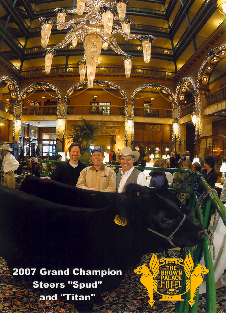 Spud and Titan, 2007 Champion Steers, at the Brown Palace
